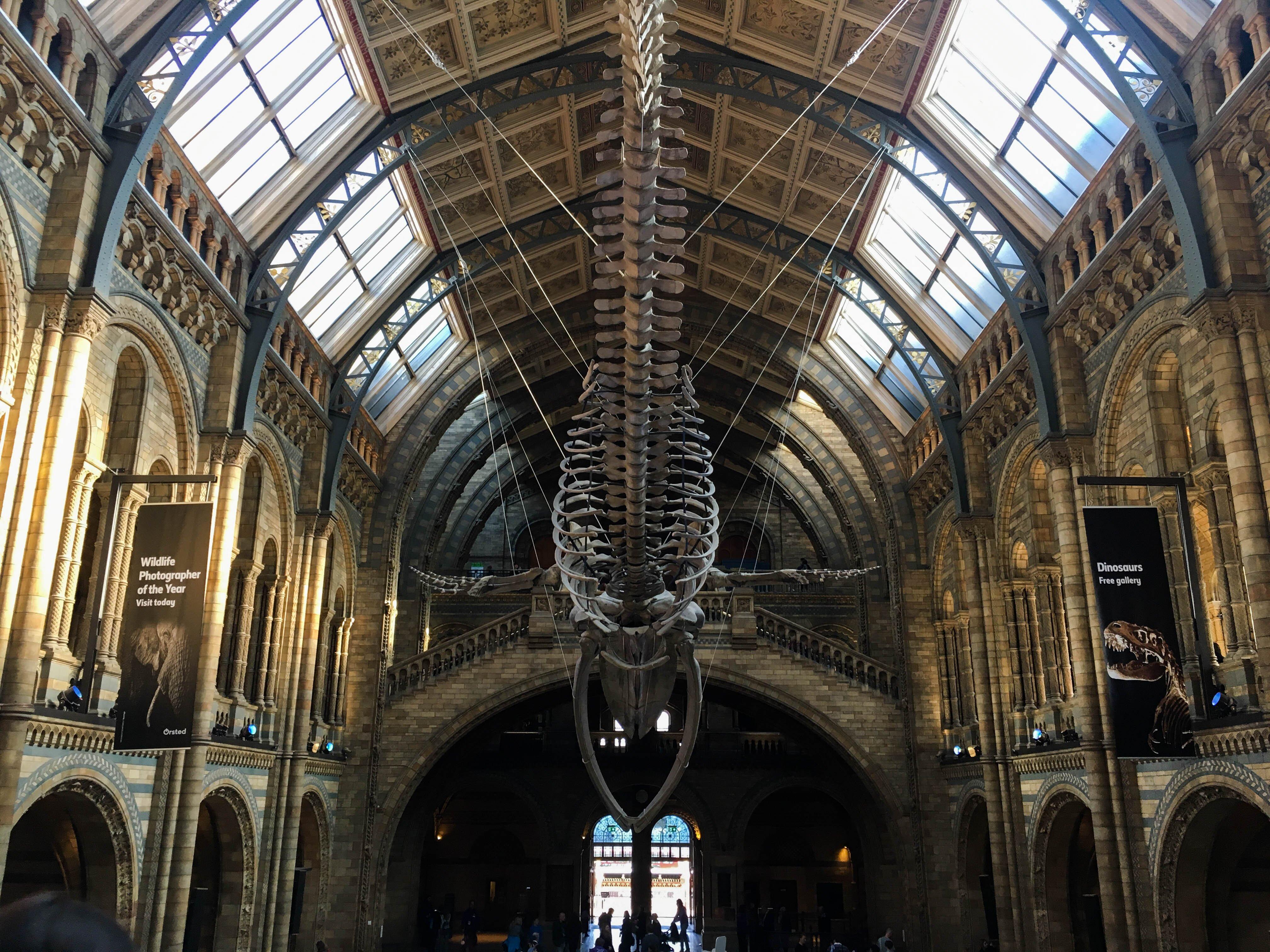 Londyn, Subiektywny przewodnik po Londynie, Gmale Goes To London, Bloger modowy w Londynie, Jak się ubrać do Londynu, Moda męska, Muzeum Historii Naturalnej