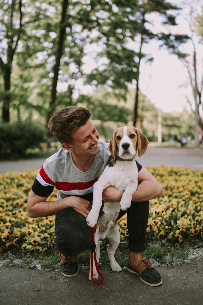 Beagle, Mity na temat Beagli, Hodowla Beagle, Krakowski blog, Jak wychować beagle'a?, Problemy z beaglami